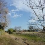 新河岸川旧流路ビオトープ