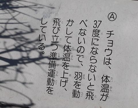 江川緑道蝶の記述