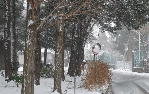 八幡神社木立に雪