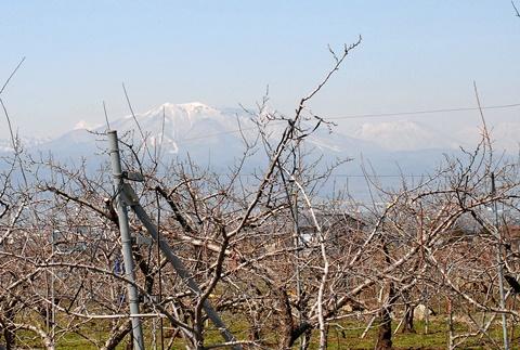 飯綱山とリンゴ畑
