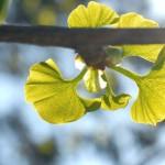 新緑・新芽をめぐる