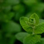 緑陰 Shade