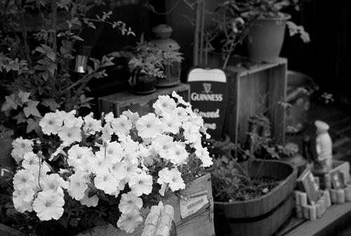 店先の白い花