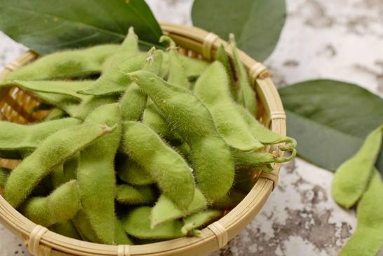 青大豆収穫