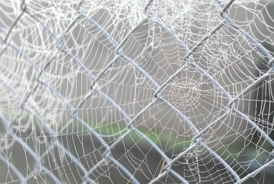 霧とクモの巣