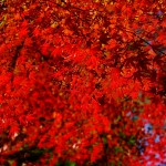 紅葉がヤバイ