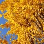 最後の秋色ですね