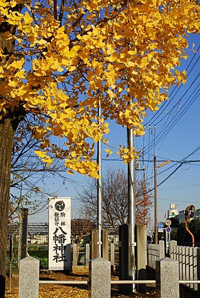 八幡神社銀杏
