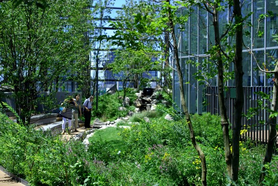 屋上庭園「豊島の森」・「グリーンテラス」