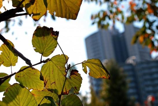 ふじみ野の秋