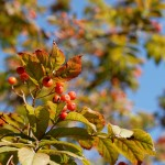 秋のふじみ野写真散歩