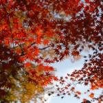 駒林八幡神社の紅葉がすごい
